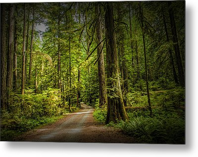 Dirt Road On Vancouver Island Metal Print by Randall Nyhof