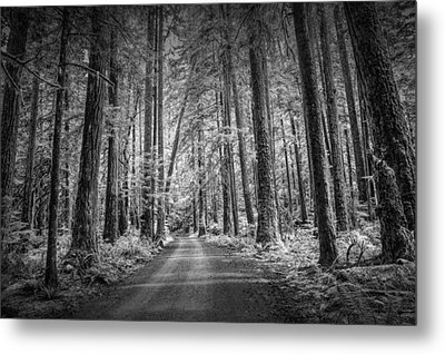 Dirt Road Through A Rain Forest In Black And White Metal Print by Randall Nyhof