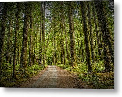 Dirt Road Through A Rain Forest On Vancouver Island Metal Print by Randall Nyhof