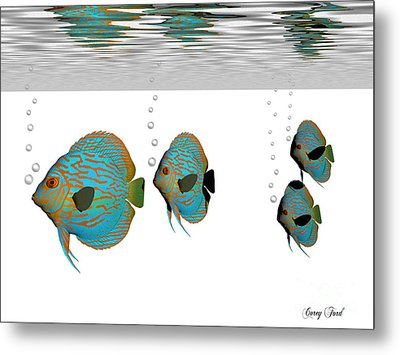 Discus Fish Metal Print by Corey Ford