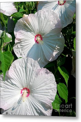 Dish Flower Metal Print