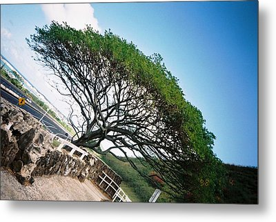 Disoriented Tree Metal Print by Judyann Matthews