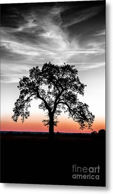 Metal Print featuring the photograph Distinctly by Betty LaRue