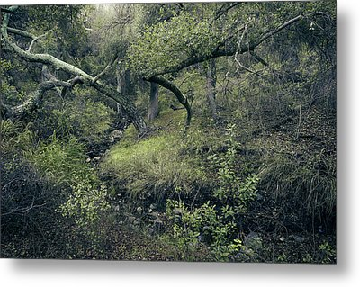 Metal Print featuring the photograph Ditch And Oaks by Alexander Kunz