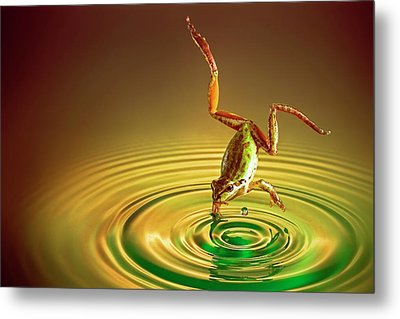 Metal Print featuring the photograph Diving by William Lee