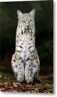 Divinity Metal Print by Big Cat Rescue