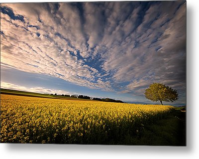 Dizziness Of Spring Metal Print by Dominique Dubied