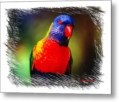 Metal Print featuring the photograph Do-00153 Colourful Lorikeet by Digital Oil
