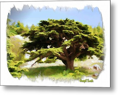 Metal Print featuring the photograph Do-00319 Cedar Tree by Digital Oil