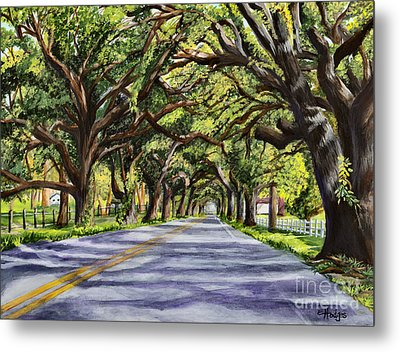 Docville Oaks Metal Print by Elaine Hodges