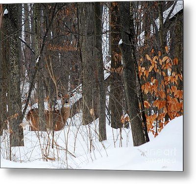 Metal Print featuring the photograph Doe In Woods by Lila Fisher-Wenzel