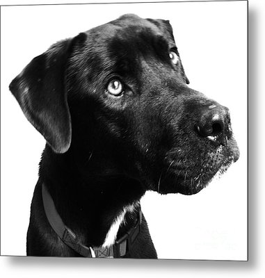 Dog Metal Print by Amanda Barcon