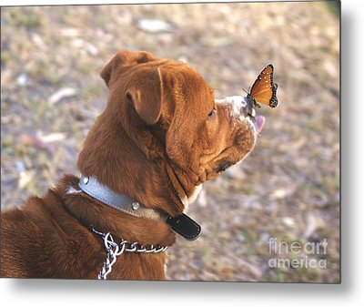 Dog And Butterfly Metal Print by John  Kolenberg