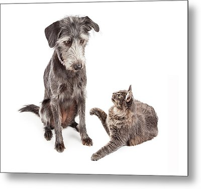 Dog And Cat Laying Together Looking Forward Metal Print by Susan Schmitz