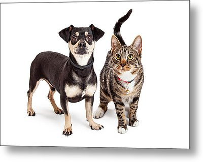 Dog And Cat Standing Looking Up Together Metal Print by Susan Schmitz