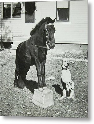 Dog And Pony Show Metal Print by Krista Barth