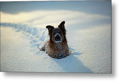 Dog Dog In Snow                   Metal Print by F S