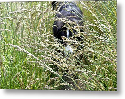Dog Hiding In The Grass Metal Print by Pelo Blanco Photo