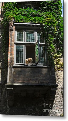 Dog In A Window Above The Canal In Bruges Belgium Metal Print