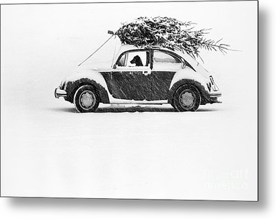 Dog In Car  Metal Print by Ulrike Welsch and Photo Researchers