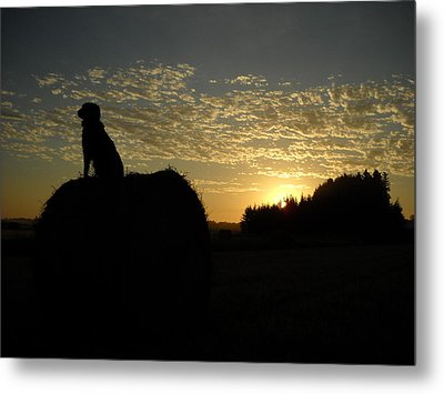 Dog On Hay Greeting Sunrise Metal Print