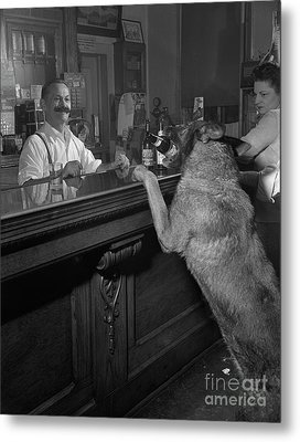 Dog Ordering A Beer Metal Print by The Harrington Collection