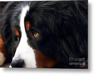 Dog . Photo Artwork Metal Print by Wingsdomain Art and Photography