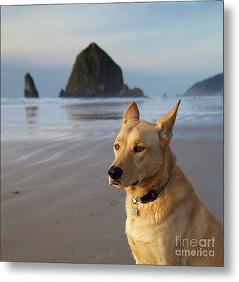 Dog Portrait @ Cannon Beach Metal Print