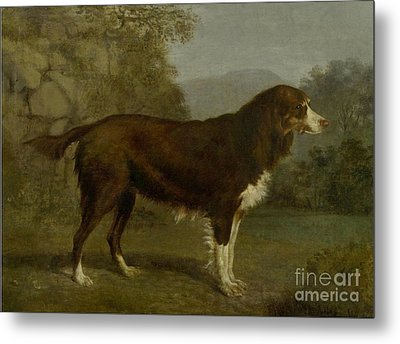 Dog Portrait In A Landscape Metal Print by MotionAge Designs