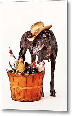 Metal Print featuring the photograph Dog Sitter by Susan Stone