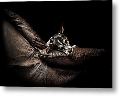 Dog Tired Metal Print by Paul Neville