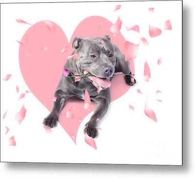 Dog With Pink Rose On Heart Shape Background Metal Print by Jorgo Photography - Wall Art Gallery