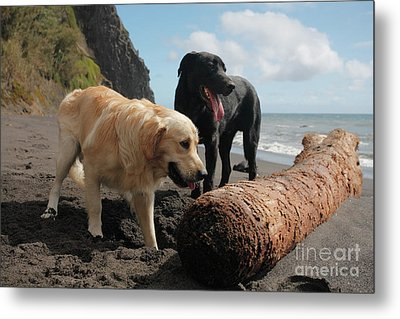 Dogs Playing At The Beach Metal Print by Gaspar Avila