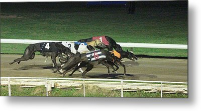 Dogs Racing Metal Print by Tom Conway