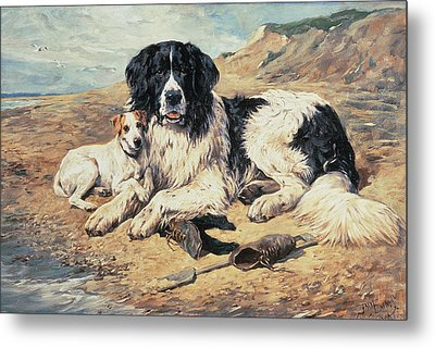 Dogs Watching Bathers Metal Print by John Emms