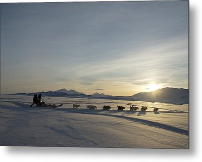Dogsledge, Northern Greenland Metal Print by Louise Murray