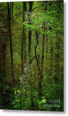 Dogwood In The Forest Metal Print by Thomas R Fletcher