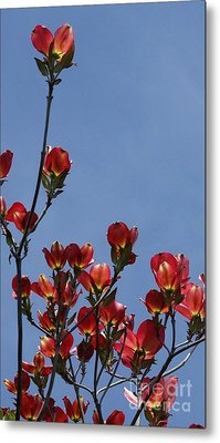 Metal Print featuring the photograph Dogwood by Victor K