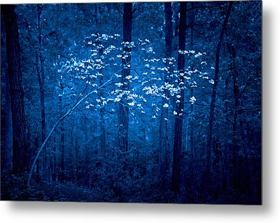 Metal Print featuring the photograph Dogwoods Of Texas by Linda Unger
