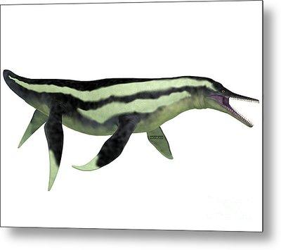 Dolichorhynchops Plesiosaur On White Metal Print by Corey Ford