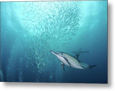 Dolphin Metal Print by Alexander Safonov