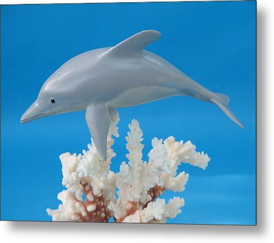 Dolphin On Coral Metal Print by Jack Murphy