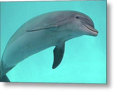 Dolphin Metal Print by Sandy Keeton