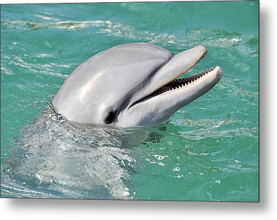 Dolphin Smiling Close Up Metal Print