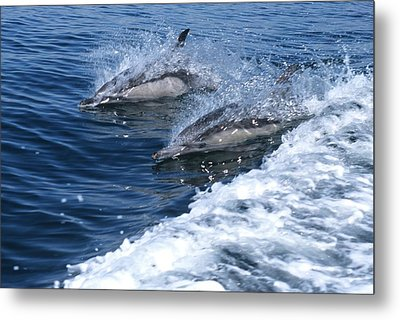 Dolphin Surfing Fantasy Metal Print by Don Kreuter