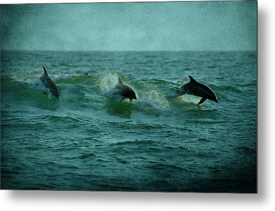 Dolphins Metal Print by Sandy Keeton