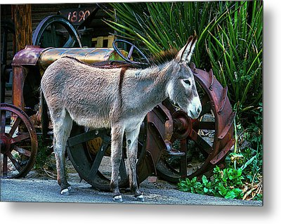 Donkey And Old Tractor Metal Print by Garry Gay