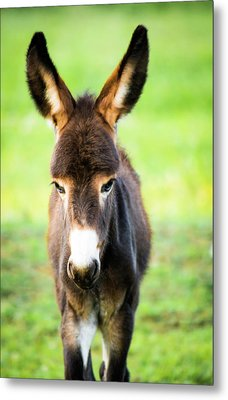 Metal Print featuring the photograph Donkey Ears by Shelby Young