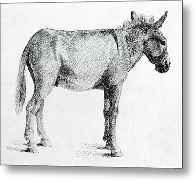 Donkey Metal Print by George Stubbs
