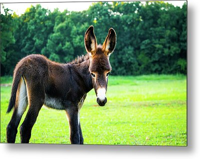 Metal Print featuring the photograph Donkey In The Pasture by Shelby Young
